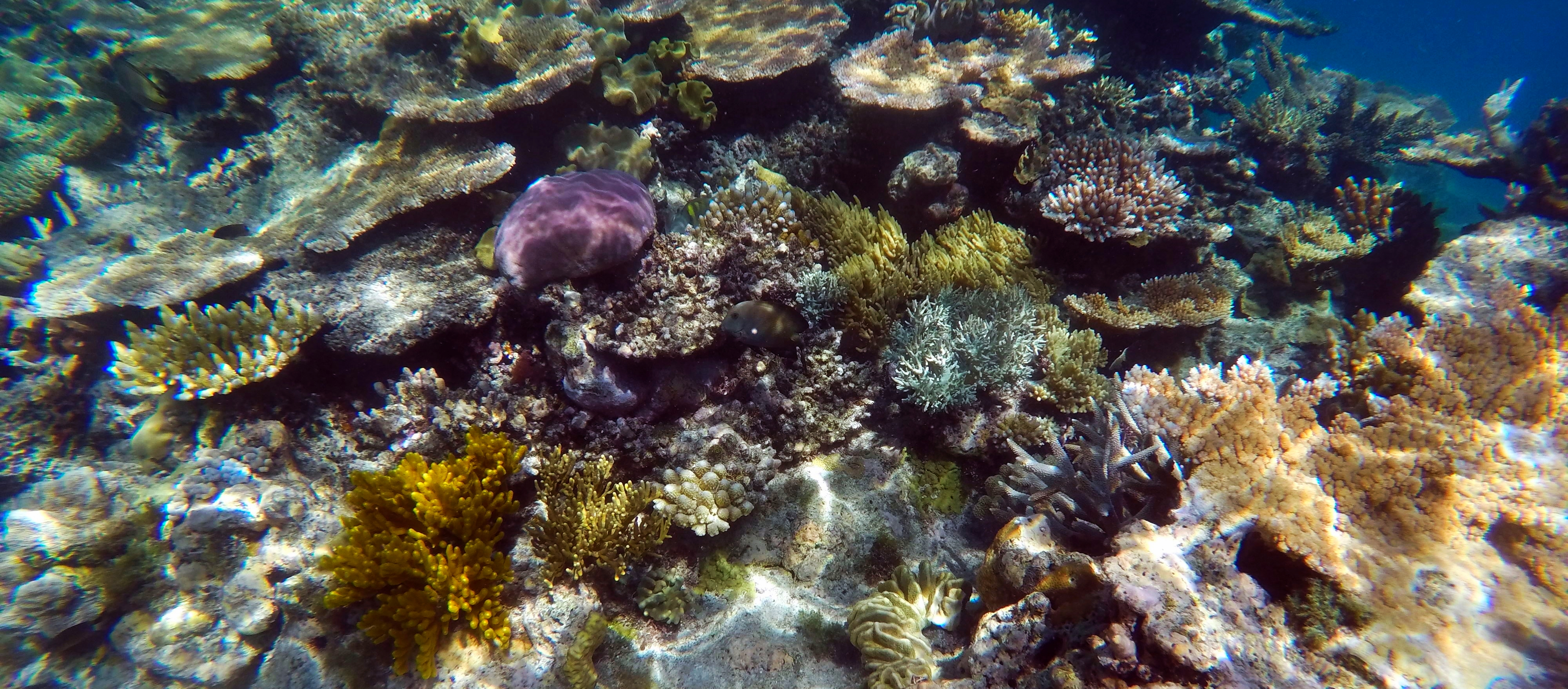 Does the Great Barrier Reef Live up to the Hype?